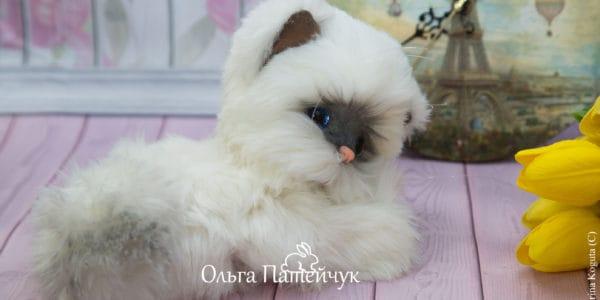 Котенок Облачко